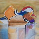 Perching Duck